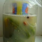 Recept na rychlokvašky v slaném nálevu