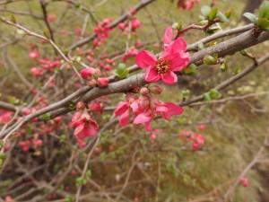 Rozkvétající jarní stromy